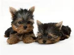 dos perritos descansando