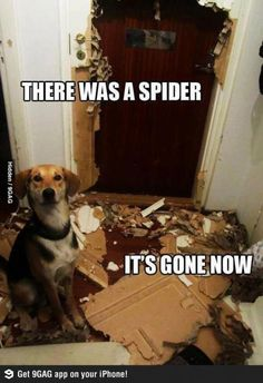 Guard dog on spider control Meme | Slapcaption.com