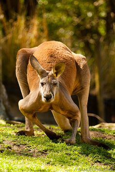 18+ Cute Australian Animals Pictures that Can Melt Your Heart [So Cute