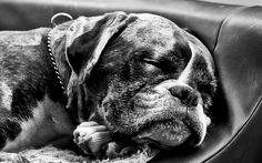 1920x1200 Awesome dog