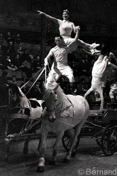 Circus horses at Ludrano Paris 1939