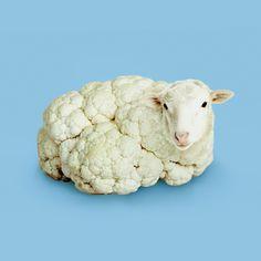 sheep / cauliflower / digital art / photoshop illustration / blue and white Photomontage, Photo Illusion, Creative Photography, Art Photography, Exposure Photography, Levitation Photography, Fantasy Kunst, Visual Puns, Anime Kunst