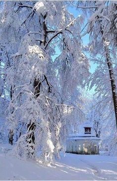 Magic of snow... ❄