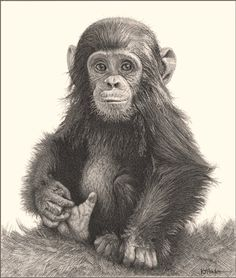 drawing amimals with pencil. incredibly realistic pencil drawings of cute and adorable animals . Pencil Drawings Of Animals, Realistic Pencil Drawings, Amazing Drawings, Cool Drawings, Drawing Sketches, Drawing Ideas, Sketching, Drawing Animals, Drawing Tutorials