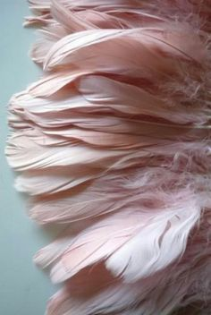 pink feathers against pastel blue background Pink Love, Pretty In Pink, Pastel Pink, Blush Pink, Gris Rose, I Believe In Pink, Pink Feathers, Everything Pink, Pink Aesthetic