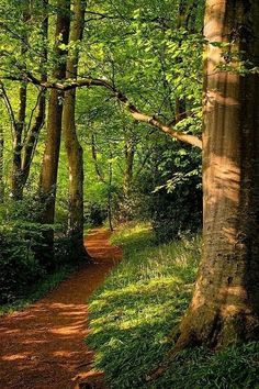 Taking a walk in an enchanting forest (with little fairy houses in the trees)! Wayford Woods ~ Somerset, England (Photo via Shannon) Forest Path, Forest Trail, Tree Forest, Redwood Forest, Magical Forest, Beautiful Forest, Walk In The Woods, Parcs, Pathways