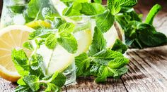 Léčivé oregano - kde ho sbírat a jak pěstovat + 5 domácích receptů Korn, Parsley, Pesto, Barbecue, Cantaloupe, Spinach, Cabbage, Herbs, Fruit