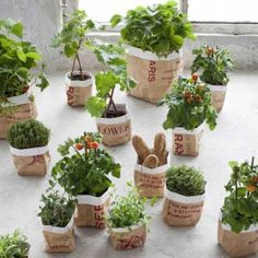 Paper bags as pots around the plastic ones for a rustic look... Sac en papier - Taille L - Le Repère des Belettes