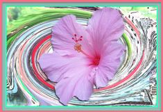 Floral Wall Art. Exciting New Look. Heavy Weight Premium 13x19 Gloss Paper. Vivid Images with Saturated Color. Art Photography. Wall Decor. by VintageArtForLiving on Etsy https://www.etsy.com/listing/477391827/floral-wall-art-exciting-new-look-heavy