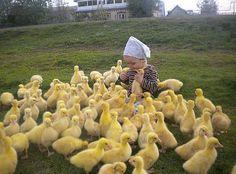 Lots of ducklings