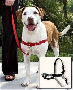 Got a dog that yanks your arm out of its socket every time you go for a walk? I do. This is the best invention. Ever.