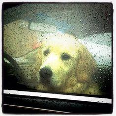 its a rainy day...a rainy day | its raining outside so we cant go out and play......wouldnt you like to goooooooo anywaaaaay