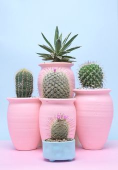 cactus, pink, and pastel image