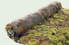 rol vetplanten voor bv schuurdak