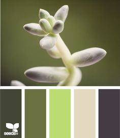 """I could try to """"cool down"""" the tan walls and go with this pallete  succulent tones"""