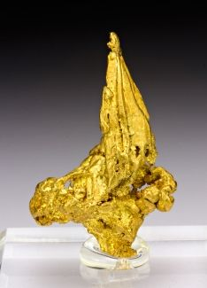 A gold specimen like this one is worth up to 25 times what it is in just gold weight.  TreasureForce