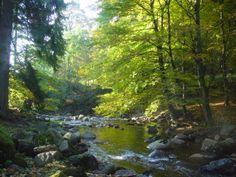 Entlang der Kalten Bode erstreckt sich idyllisch und wildromatisch das Elendstal. Zwischen den beiden Harzer Orten Elend und Schierke kommn der Wanderfreudige und der Naturliebhaber voll auf seine Kosten.