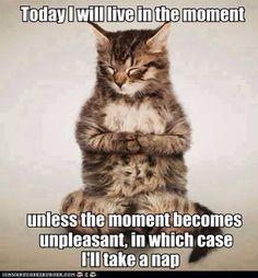 """Sagesse de chat: """"Aujourd'hui je vais vivre le moment présent... sauf si le moment présent devient désagréable, dans quel cas j'irai faire la sieste"""""""