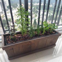 horta em apartamento