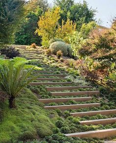 Steps with integrated greenery  by KAA Design Photographed by Sharon Risedoroph…