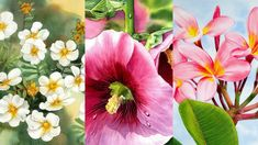 3 courses bundle. This course includes: Spirit of Hope, Hollyhock and Plumeria tutorials.
