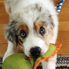 Puppy playing!