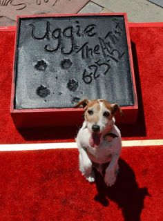 Uggie - the doglebrities in the movie 'The Artist'