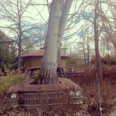 *A Tree Grows In the car~