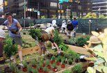 Study Finds Greening Vacant Lots Reduces Overall Crime : TreeHugger