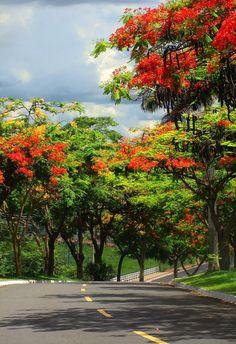 Goiânia - State of Goiás, Brazil.