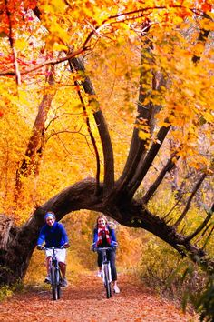 So much to do in Connecticut this fall! Presenting 100 Ways to Fall for Connecticut