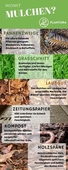 Womit mulchen? Wie mulche ich meinen Rasen richtig? Welche Vorteile hat welcher Mulch? Wir klären auf - auf Plantura findet Ihr auch eine Anleitung zum Mulchen! #Rasen