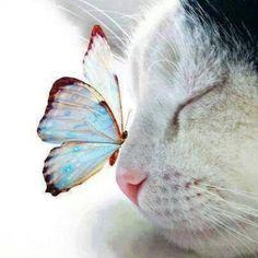 Las mejores imágenes de mariposas posándose | 20Minutos (Listas)