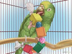 Train the parakeet