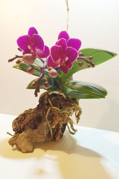 Purple Live Orchid Mounted to Drift Wood by ShopKINGSTON on Etsy