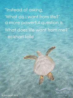 Instead of asking, 'what do I want from life?' a more powerful question is, 'what does life want from me?' Eckhart Tolle Powerful question, embrace what life has in store for you! Now Quotes, Great Quotes, Quotes To Live By, Life Quotes, Spiritual Quotes, Positive Quotes, Motivational Quotes, Inspirational Quotes, Spiritual Meditation