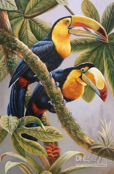 ART -(animal) Tropical Art, Tropical Birds, Exotic Birds, Colorful Birds, Owl Art, Bird Art, Polychromos, Bird Illustration, Bird Pictures