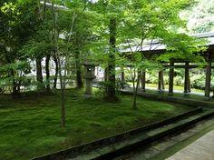 creating a moss garden
