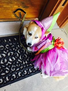Carmen was one belle of the Bark Ball June 20 to benefit the Washington Humane Society for its 145th anniversary