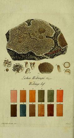 | Svenska lafvarnas färghistoria  Stockholm :Tryckt hos C. Delén,1805-[1809]  biodiversitylibrary.org/page/13683279 | n73_w1150 by BioDivLibrary, via Flickr