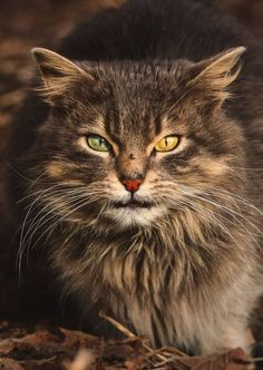 11 portraits intimes de chats errants