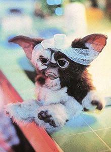 Gizmo = soooo stinkin' cute!!!