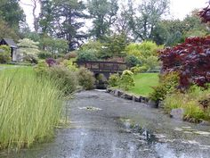 Even locals don't always know about this beautiful park in Edinburgh.  The Kyoto Friendship Garden at Lauriston Castle, Edinburgh.  We visited for a fundraiser for @itsgood2give