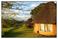 Manzini - Swaziland. The ostrich was always outside my hut! <3