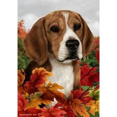 36 best cute things for beagle lovers images on pinterest beagle tamara burnett fall leaves beagle flag dog grooming solutioingenieria Choice Image