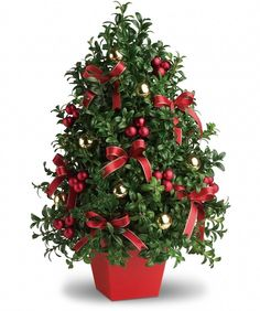 Deck the halls - and tables, and mantles, and foyers - with this charming tabletop Christmas tree! Elegant English boxwood stems are hand arranged to look like a mini Christmas tree, complete with all the festive trimmings! Tabletop Christmas Tree, Mini Christmas Tree, Christmas Flowers, Green Christmas, Christmas Colors, Christmas Wreaths, Christmas Ornaments, Gold Ornaments, Holly Christmas
