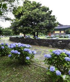 서귀포 시민들만 찾는 숨겨진 여름 명소, 속골유원지 Jeju Island, Stepping Stones, Places To Go, Outdoor Decor, Korea, Traveling, Entertainment, Life, Holidays