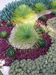 Paysage rustique / cour avec jardin Succulent, désert aménagement paysager, Blue Spruce Orpin Sedum reflexum 'Blue Spruce'