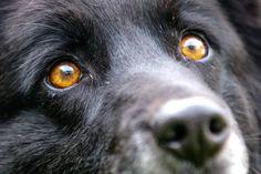 Картинки по запросу глаза собаки