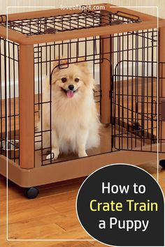 How to Crate Train a Puppy: It is important that you start crate training them early and keeping a close eye on them, particularly if they are still learning what is expected of them. #CrateTrainingPuppy #AtNight #Schedule #PuppyTrain Dog Training Near Me, Dog Training Treats, Puppy Training Tips, Dog Training Videos, Crate Training, Training Your Puppy, Puppy Find, Puppy Biting, Dog Training Techniques
